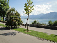Montreux -             Multi-family house  Rooms