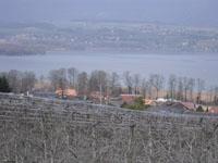 Vendre Acheter Cheseaux-Noreaz - Villa mitoyenne 5.5 pièces