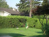 Agence immobilière Versoix - TissoT Immobilier : Villa individuelle 9 pièces