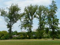 Agence immobilière Onex - TissoT Immobilier : Appartement 4.5 pièces
