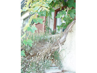 Bougy-Villars -             Einfamilienhaus 12 Zimmer