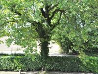 Vessy TissoT Immobilier : Maison villageoise 13 pièces