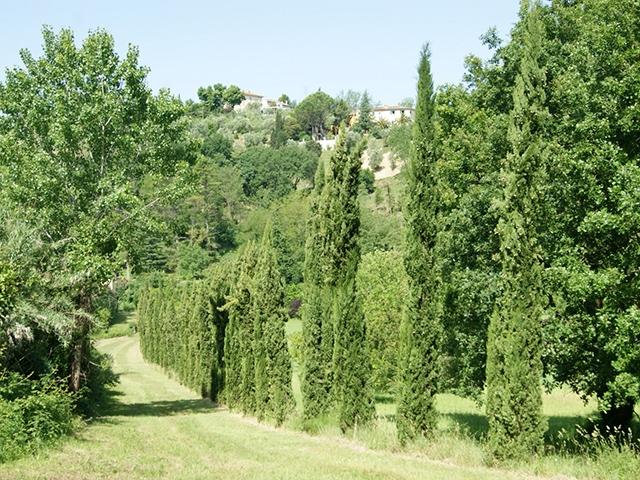 Crespina 56040 Toscana - Ferme 10.0 pièces - TissoT Immobilier