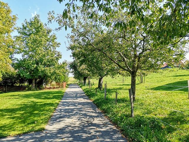 Villarlod 1695 FR - Villa mitoyenne 4.5 rooms - TissoT Realestate